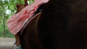 Flickan i en rosa klänning rider en brun häst på bakgrunden av träd och lövverk tillbaka sikt 4K video 4K lager videofilmer