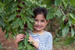 Flickan i en trädgård samlar körsbäret Royaltyfria Bilder