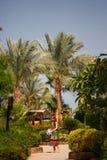 Flickan i palmträd arkivbild