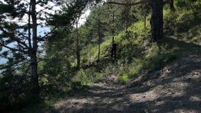 Flickan klättrar upp kullen En ung kvinna går på en skogslinga i bergen stock video