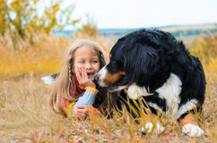 flickan ligger bredvid den stora hunden Berner Sennenhund arkivfoto