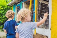 Flickan och pojken matas kaniner i den dalta zoo Royaltyfri Fotografi