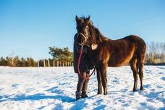 Flickan omfamnar den arabiska svarta hästen Snöig fält för vinter på en solig dag arkivbilder