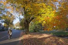 Flickan på cykeln passerar trädet för colorfullhöstlönn i driebergen Arkivbild