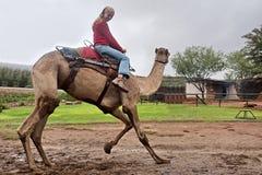 Flickan rider en danskamel Fotografering för Bildbyråer