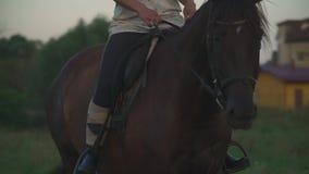 Flickan rider en häst arkivfilmer