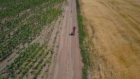 Flickan rider längs vägen mellan jordbruks- fält lager videofilmer