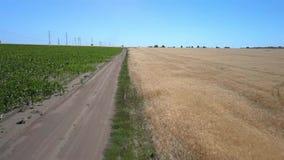 Flickan rider längs vägen mellan jordbruks- fält arkivfilmer