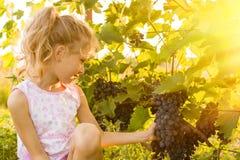 Flickan rymmer en grupp av druvor Royaltyfri Bild