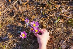 Flickan rymmer ett dröm- gräs royaltyfri fotografi
