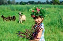 Flickan samlar sommarvildblommorna Royaltyfria Bilder