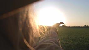 Flickan ser solen till och med hennes hand Kvinna som spelar handen med strålarna av solen Solen skiner till och med hennes fingr arkivfilmer