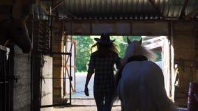 Flickan tar hästen ut ur stallen Ram från baksidan lager videofilmer