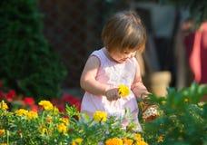 Flickaplockningblommor Royaltyfria Bilder