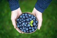 Flickas händer med en bunke av nytt skördade organiska blåbär arkivfoto