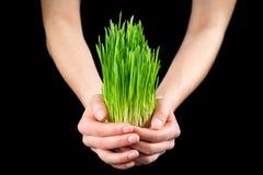 Flickas händer som rymmer grönt gräs arkivbild