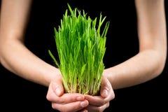 Flickas händer som rymmer grönt gräs under regn royaltyfri fotografi
