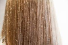 Flickas hår vertikalt från tillbaka målat, slut upp långt rakt blont kvinnligt hår arkivbilder