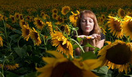 flickasolrosor Fotografering för Bildbyråer