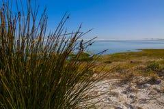 Flickaspring till och med seagrass Royaltyfria Foton