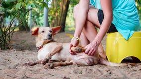 Flickavolontär i barnkammaren för hundkapplöpning som gör den gulliga vuxna hunden för sjukgymnastik royaltyfri foto