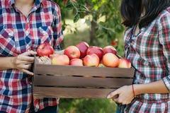 Flickor med Apple i den Apple fruktträdgården Arkivbild