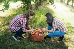 Flickor med Apple i den Apple fruktträdgården Fotografering för Bildbyråer