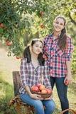 Flickor med Apple i den Apple fruktträdgården Royaltyfri Fotografi