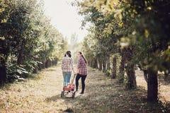Flickor med Apple i den Apple fruktträdgården Arkivfoto