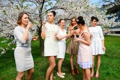 Flickor med champagne som firar i sakuras trädgård Royaltyfri Foto