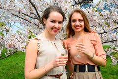 Flickor med champagne som firar i sakuras trädgård Royaltyfri Bild