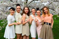 Flickor med champagne som firar i sakuras trädgård Royaltyfri Fotografi