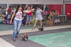 Flickor med deras husdjurYorkshire terrier utför en jogga ar Royaltyfri Fotografi