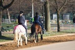 Flickor och hästar Arkivfoto