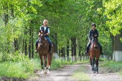 Flickor på hästryggridning Fotografering för Bildbyråer