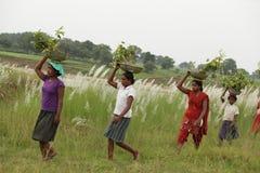 Flickor som är upptagna i koloni Fotografering för Bildbyråer