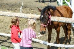 Flickor som ger ett socker till en häst arkivbild