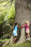Flickor som kramar det stora trädet royaltyfri foto