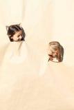 Flickor som ser till och med hål arkivfoto