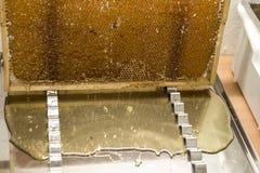 Fließen süße Honigtropfenfänger des glatten gelben goldenen Honigkammes während des Erntehintergrundes mit textspace Lizenzfreies Stockbild