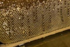 Fließen süße Honigtropfenfänger des glatten gelben goldenen Honigkammes während des Erntehintergrundes mit textspace Stockfoto