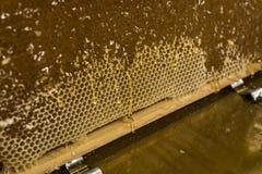 Fließen süße Honigtropfenfänger des glatten gelben goldenen Honigkammes während des Erntehintergrundes mit textspace Stockbilder