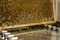 Fließen süße Honigtropfenfänger des glatten gelben goldenen Honigkammreflexionsspiegels während des Erntehintergrundes mit textsp Stockbild