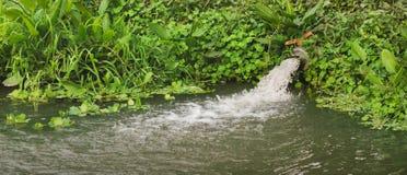 Fließendes Rohr des Abwassers Stockbild