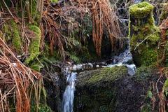 Fließendes Wasser Stockbild