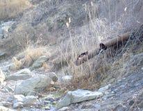 Fließendes Wasser alter Rusty Pipe Stockfotografie