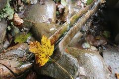 Fließendes Wasser, Wald Lizenzfreie Stockfotografie