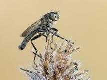 Flie d'assassin sur une usine Photo libre de droits