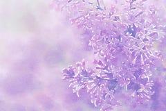 Flieder auf rosa Hintergrund digitalisiertes Bild Aquarell Stylization vektor abbildung