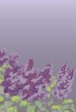 Flieder mit regnerischem Himmel Lizenzfreie Stockfotos